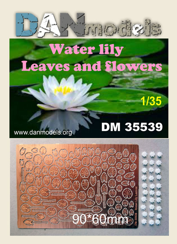DM 35539. Water lily. Leaves and flowers